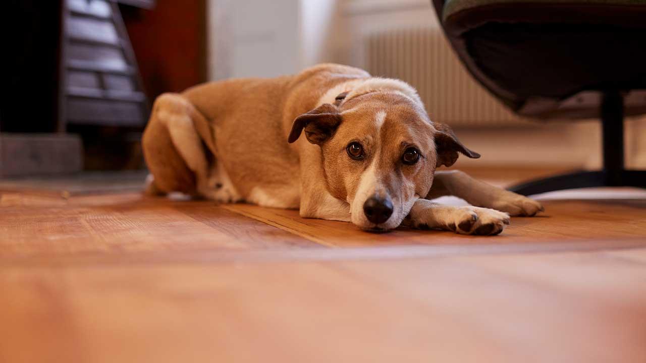 Unser Teamhund